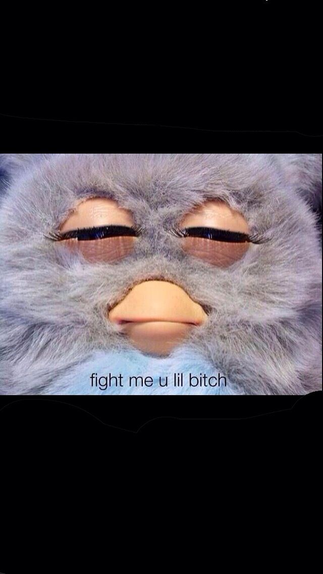 Fight Me Furby Just Because Funny Funny Memes Really Funny