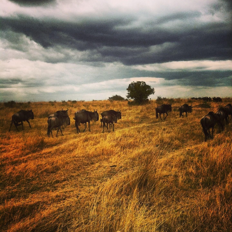 Animal migration Animal adaptations