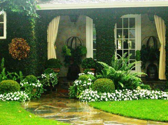 Creeping fig covering walls, large planters with metal balls, green ...