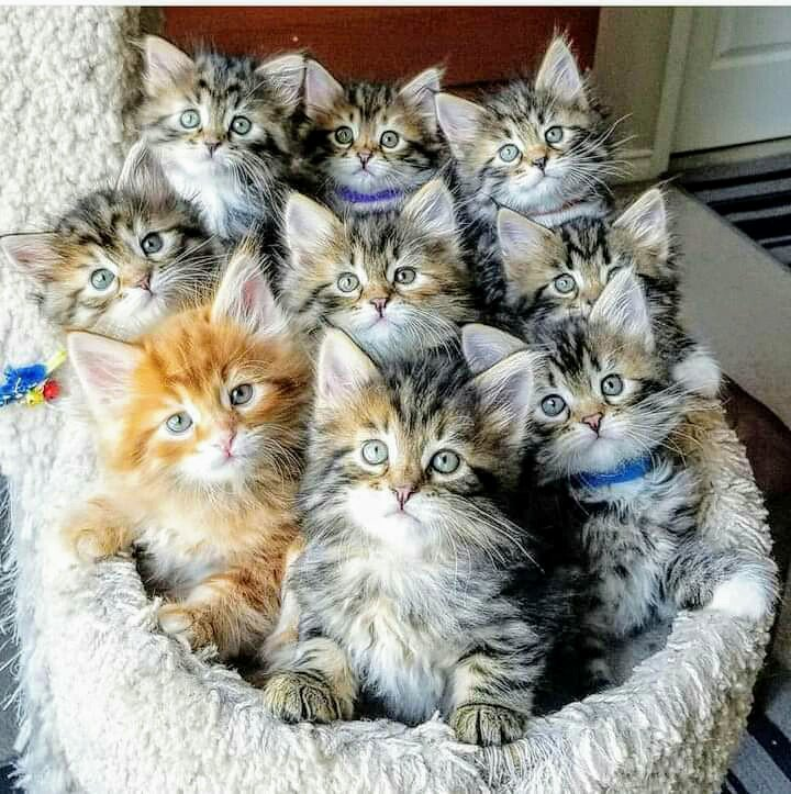No Comment On Twitter In 2020 Cute Baby Cats Kittens Cutest Baby Cats