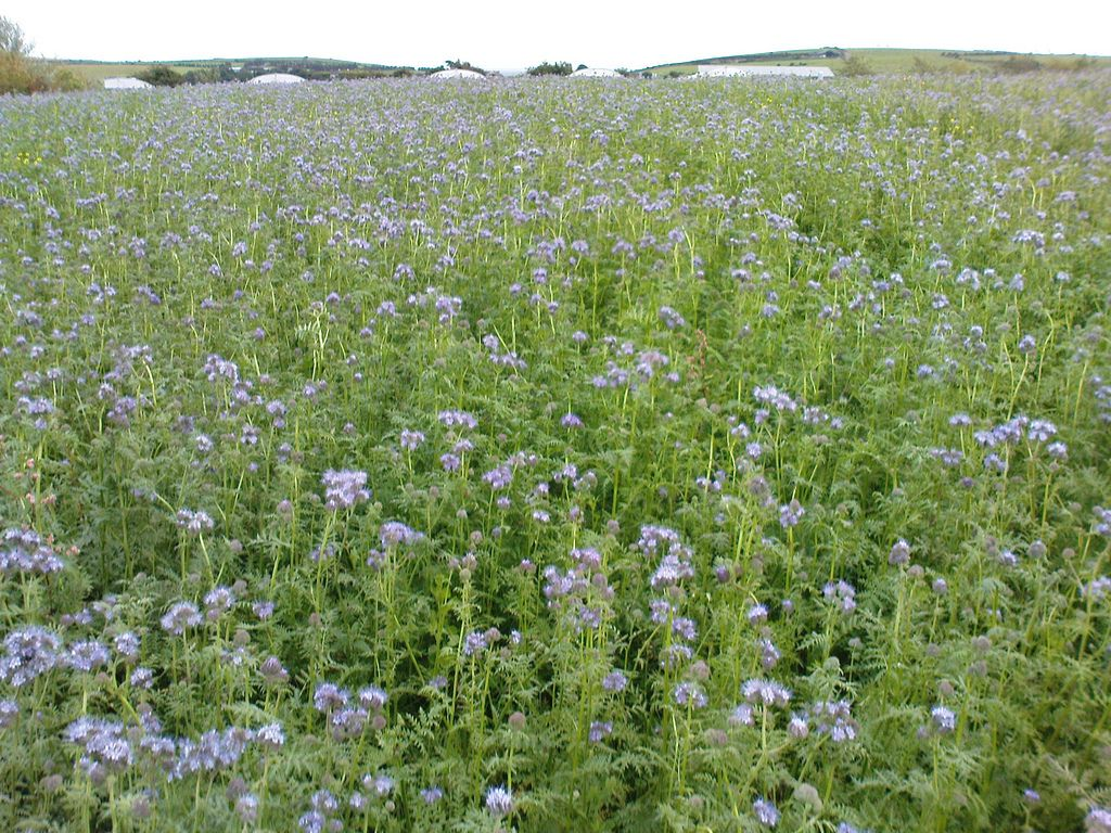 what is green manure u2013 using and making green manure gardens