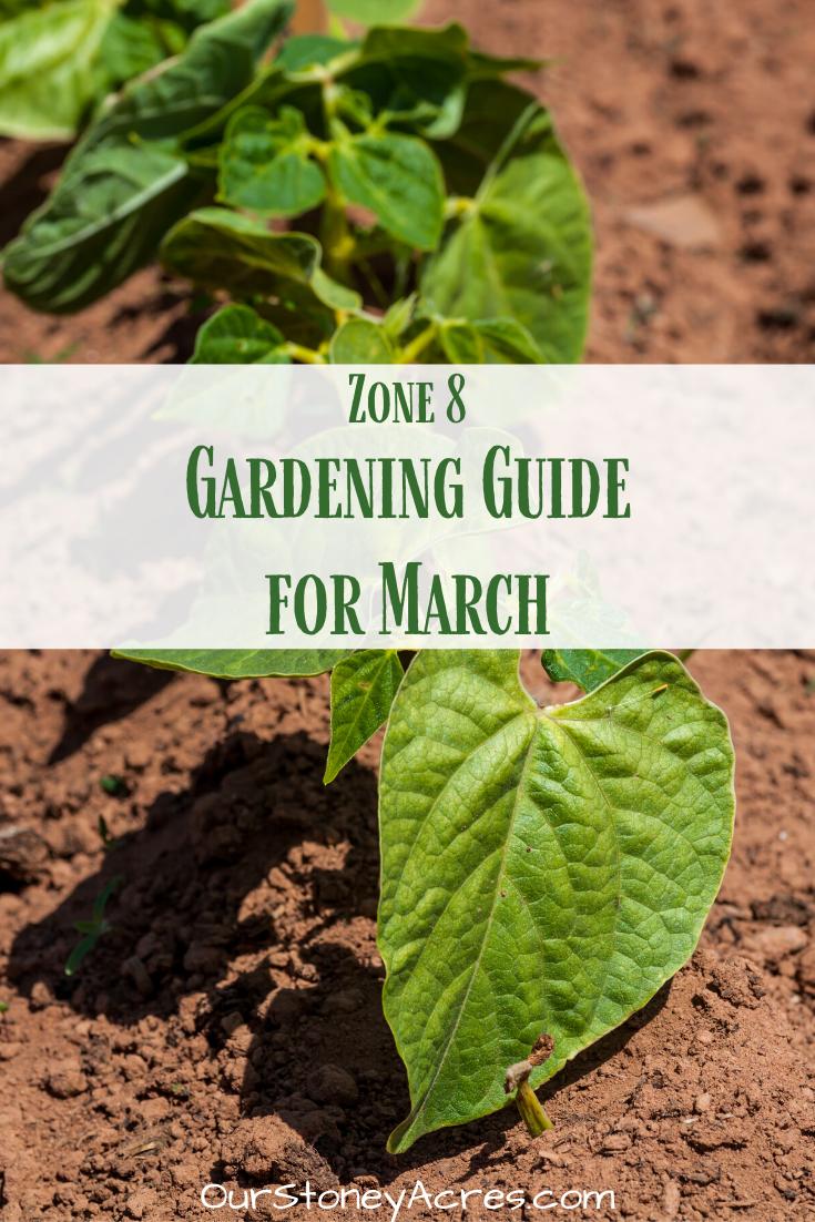 Gardening In March Zone 8 Garden Plant Markers Vegetable
