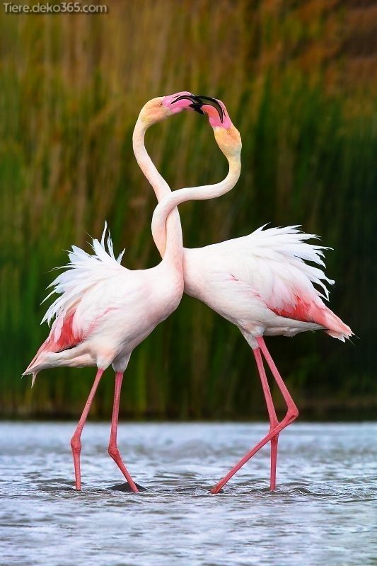 Photo of Creative and great A beautiful flamingo picture