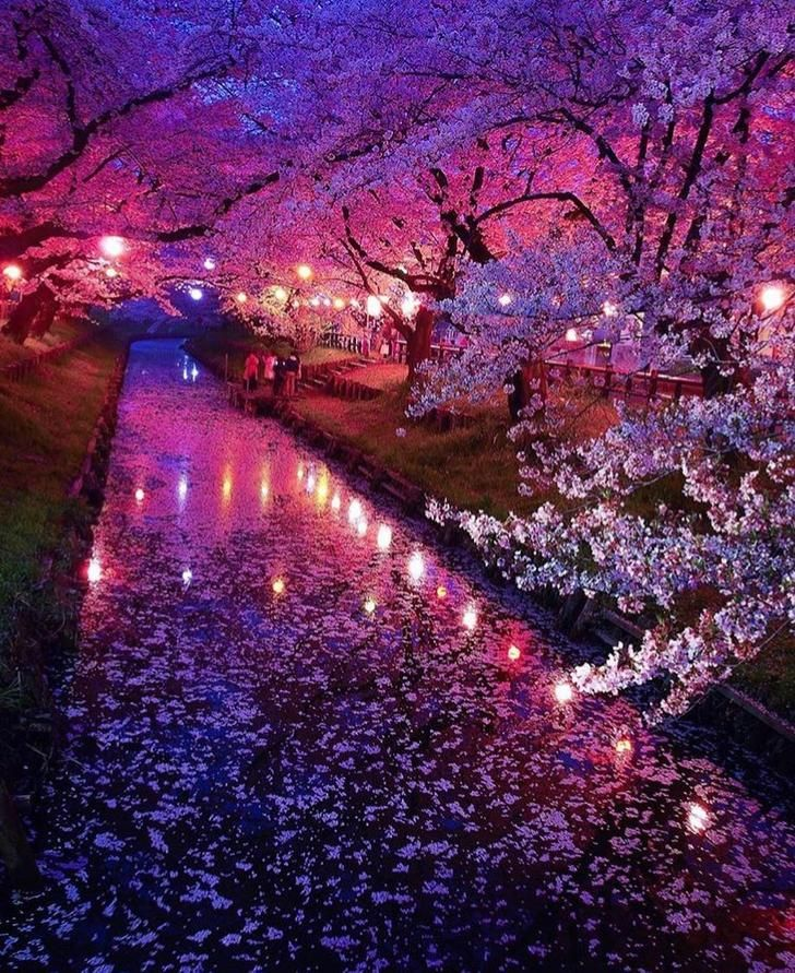 Imgur Com Cherry Blossom Japan Beautiful Landscapes Nature Photography