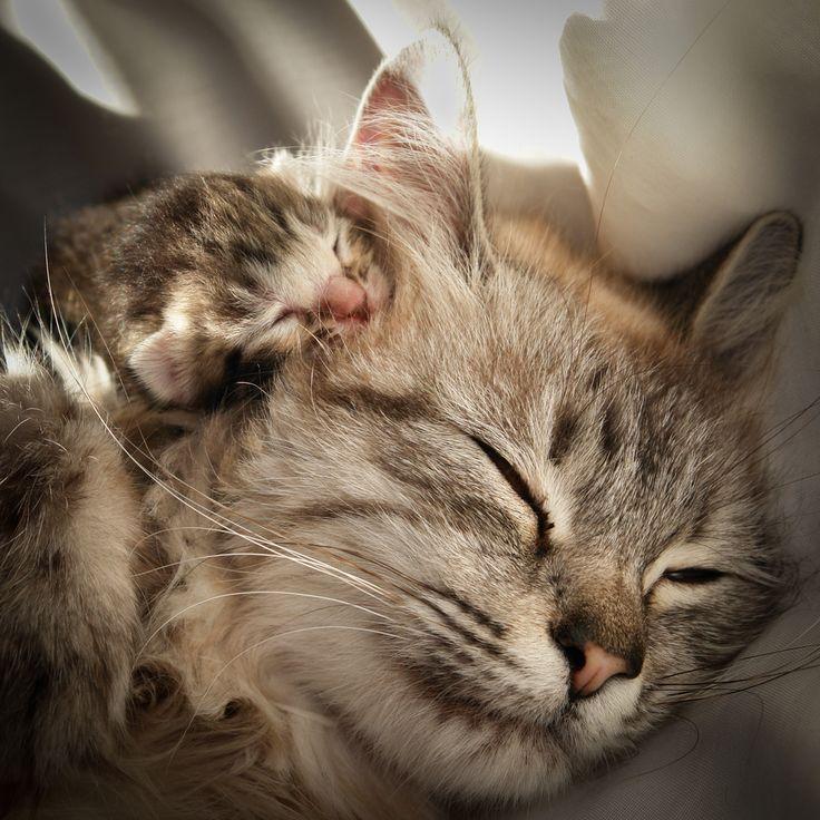 Photo of 15 Bilder von Mama Katzen und Kätzchen zum Muttertag
