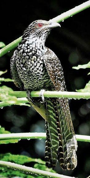 ♦ Bird ♦