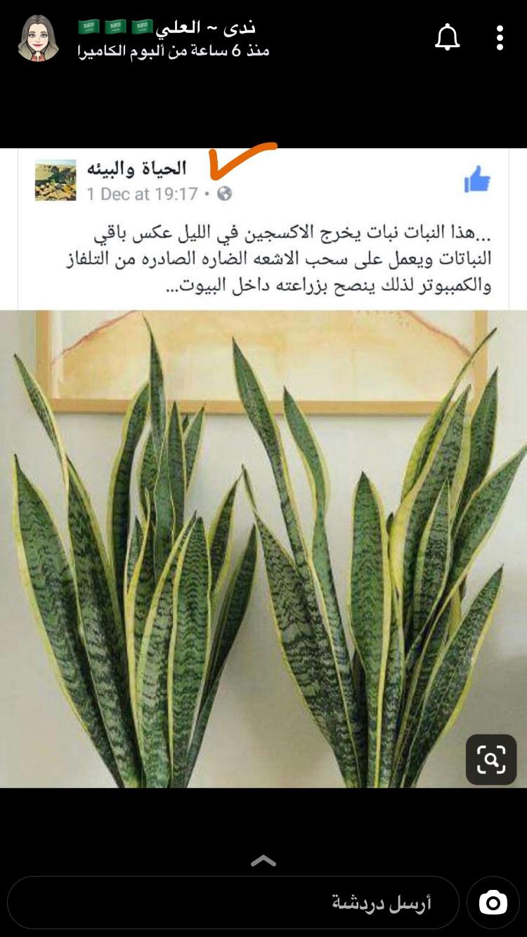 Plante Pour Cuisine Sombre Épinglé par nova nivo sur garden en 2020 | décoration balcon