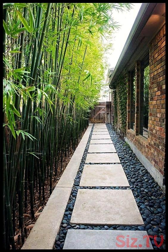 31 Backyard Landscaping Ideas on a Budget backyard stepping stones walkway and bamboo plants as a fence steppingStones Hardscaping walkway backyardLandscaping 31 Backyard...