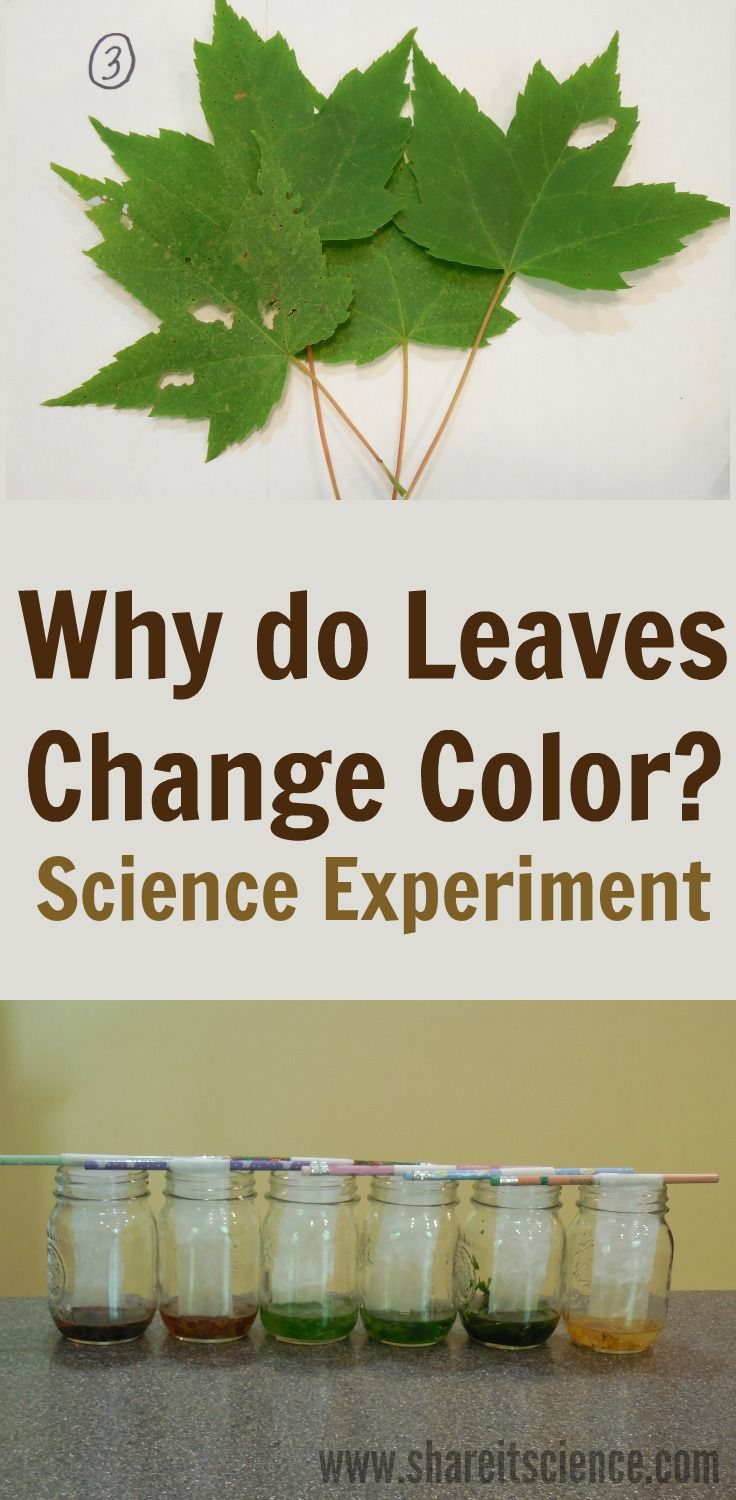 Explore why leaves change color in the autumn with this ...