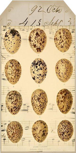 eggs & music long tag