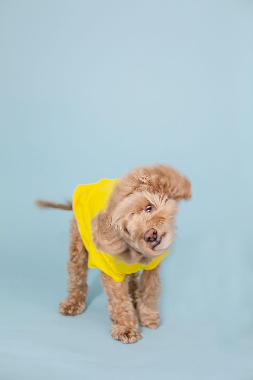 Stylish Spring Fashion For Dogs The Best Yellow Dog Rain Coat