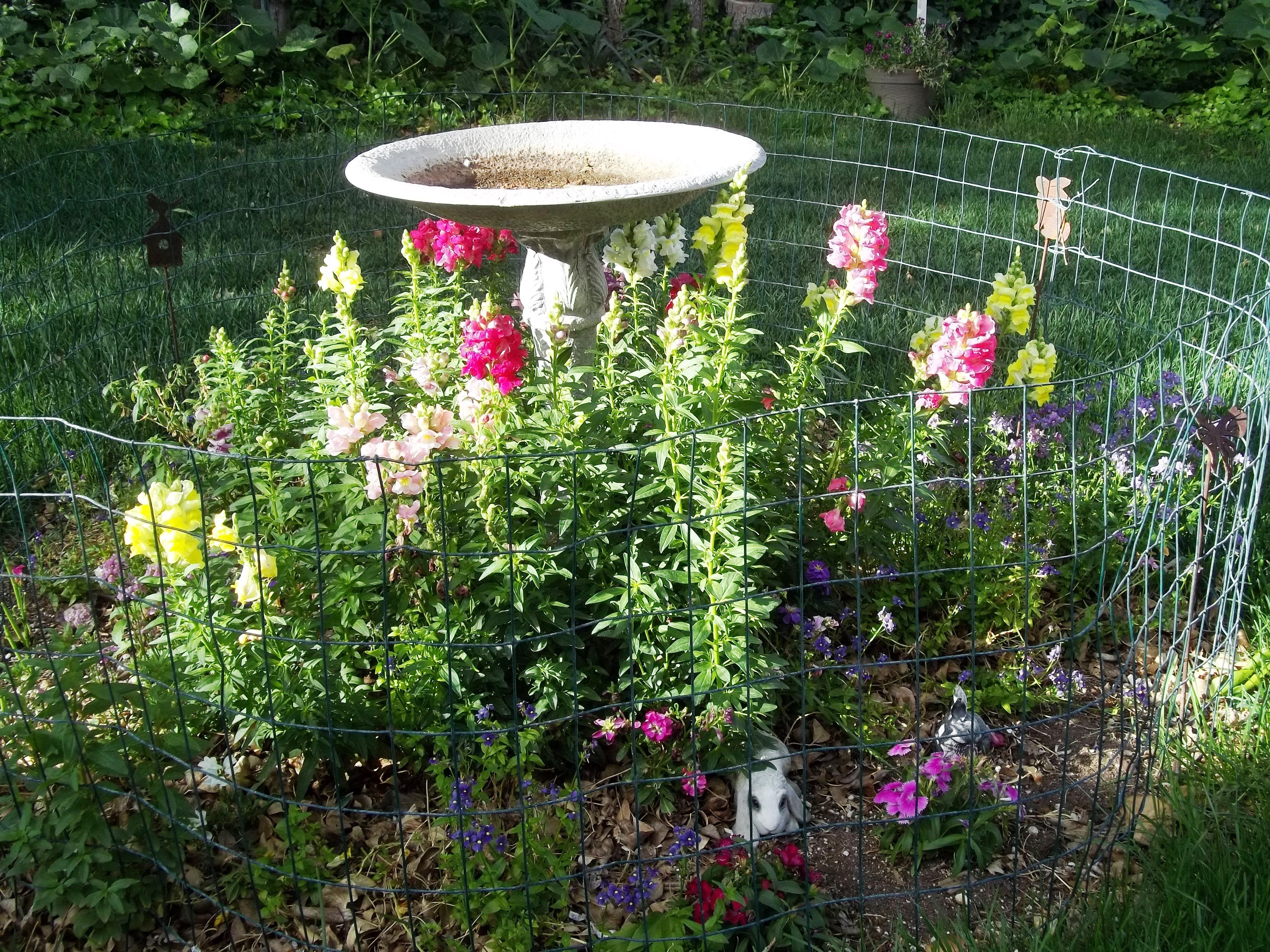 the bird bath stock snapdragon nemesia dianthus etc my