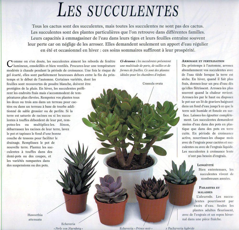Resultats De Recherche D Images Pour Plantes Grasses Entretien