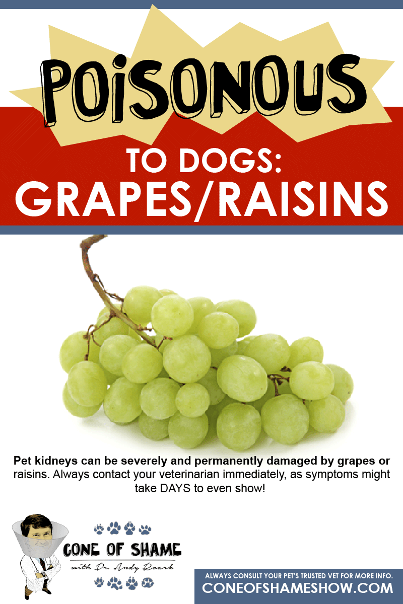 Grapes And Raisins Can Be Toxic To Dogs Contact A Veterinarian If