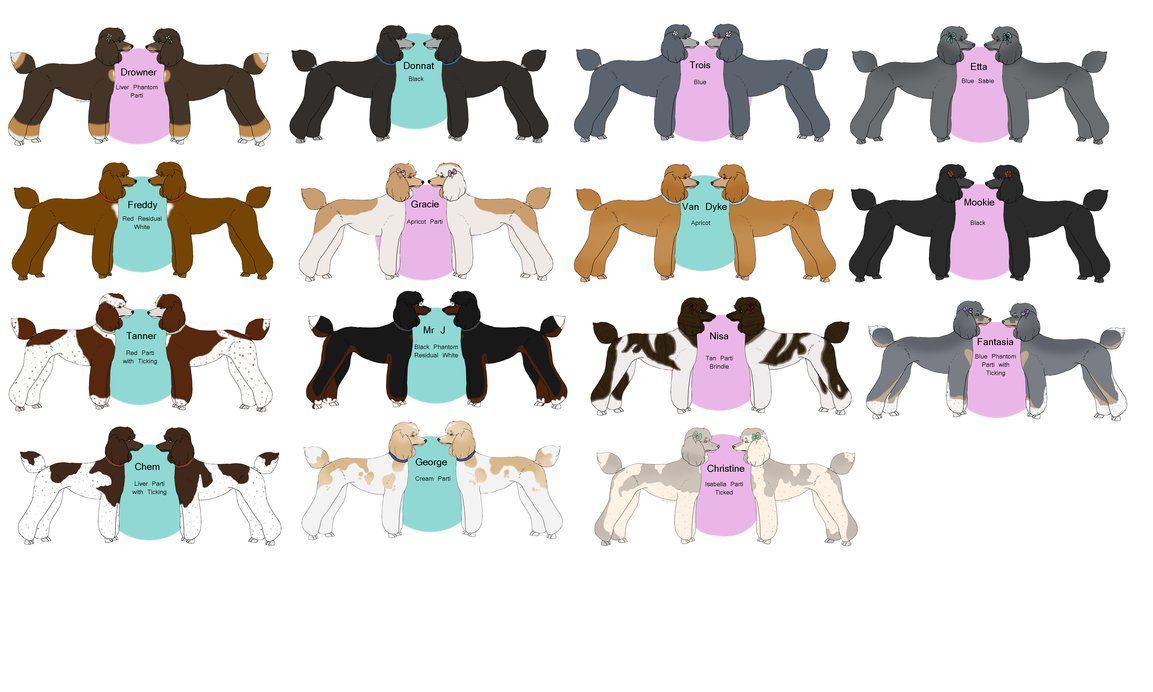 Poodle Color Chart By Tsonianfieldsranch On Deviantart Poodle Color Chart Color
