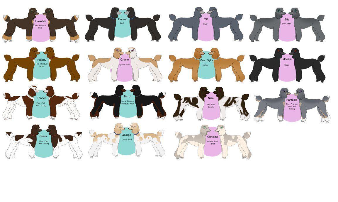 Poodle Color Chart By Tsonianfieldsranch On Deviantart Poodle