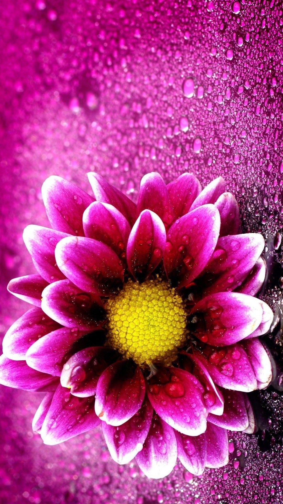 Wallpaper Purple Flowers Mobile Best Hd Wallpapers Nature