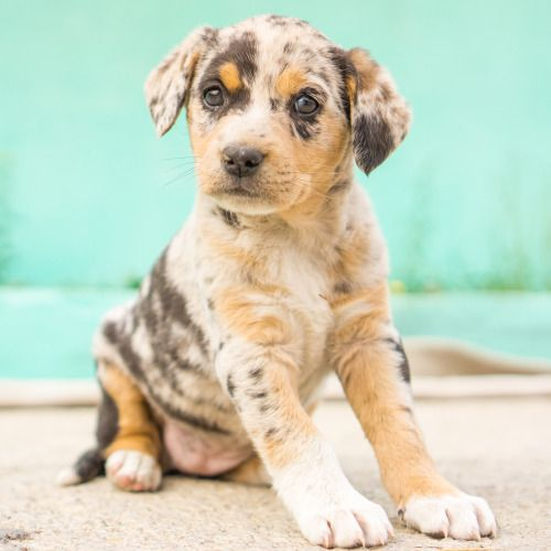 Mixed-breed puppy, 2 months old