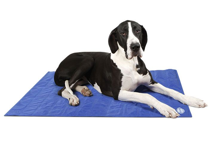 Cool Mat Scruffs Xlarge Self Cooling Wipe Clean Gel Mat 120cm X 75cm 29 99 Plush Dog Beds Dog Blanket Dog Bed Luxury