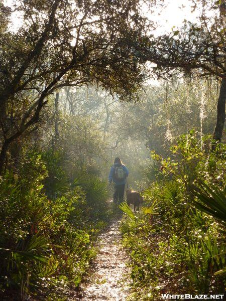 Florida Trail Ocala National Forest Florida Trail