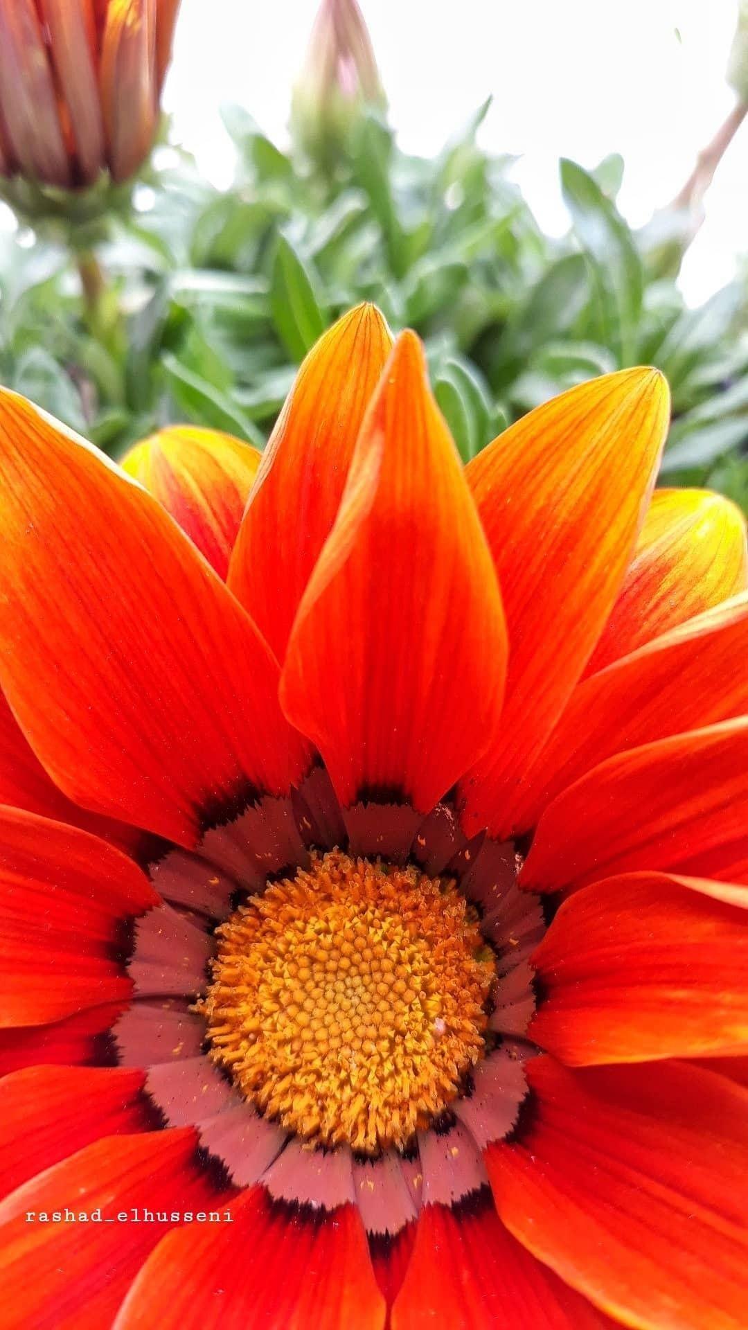 Pin On Flower