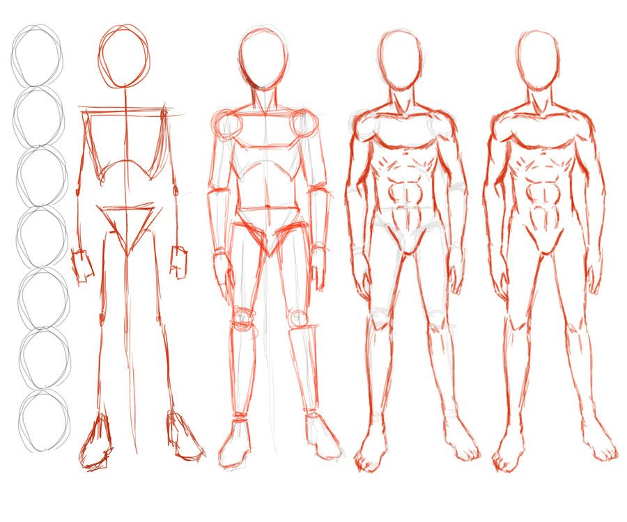 anime male body structure