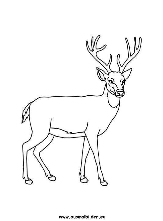 Ausmalbilder Hirsch - Hirsche Malvorlagen Deer coloring