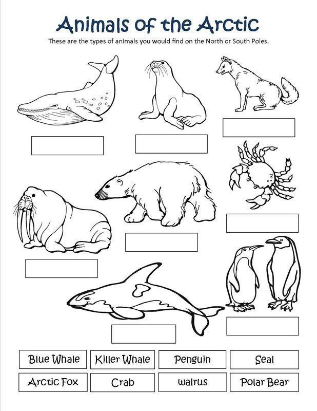 Life Sciences Ciencias De La Vida Polar Animals Artic Animals Arctic Animals Printables
