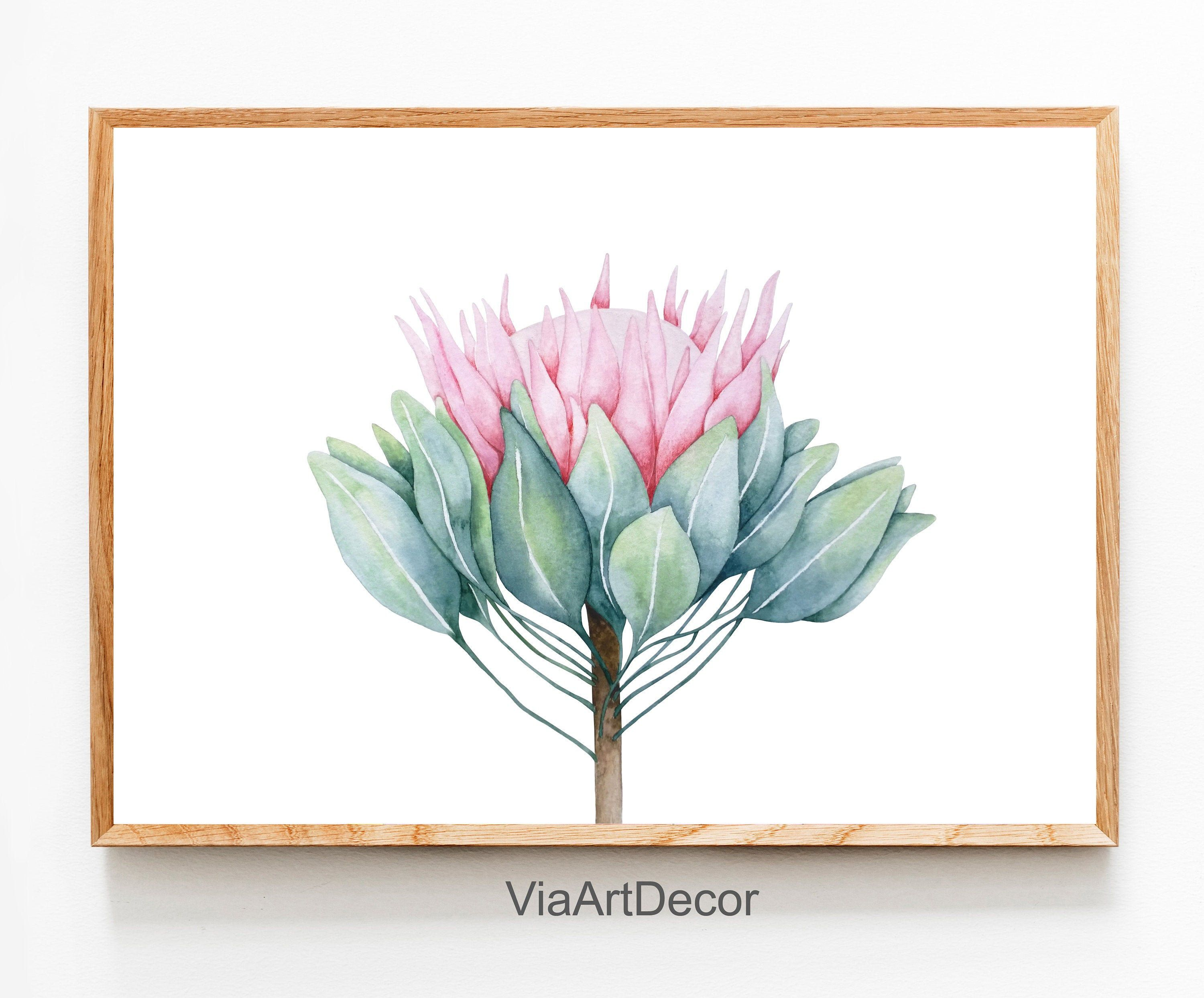 King Protea Print Watercolor Wall Art Pink Flower Modern Etsy Flower Prints Art Watercolor Wall Art Australian Painting