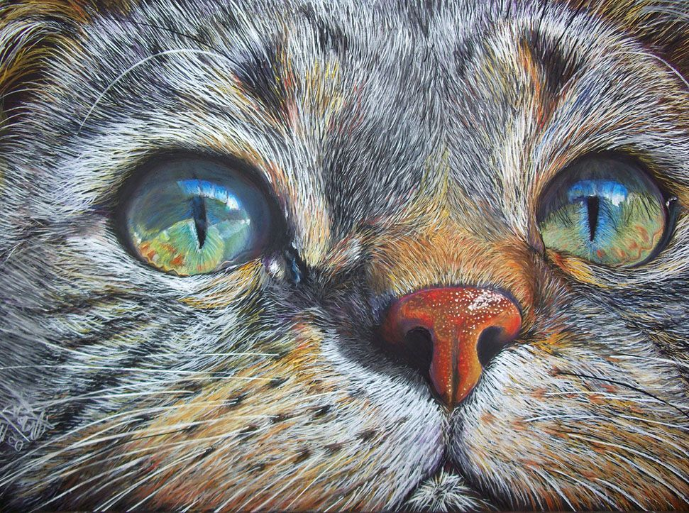 30 Beautiful Cat Drawings - Best Color Pencil Drawings and Paintings | Read full article: http://webneel.com/cat-drawing | more http://webneel.com/daily | Follow us www.pinterest.com/webneel