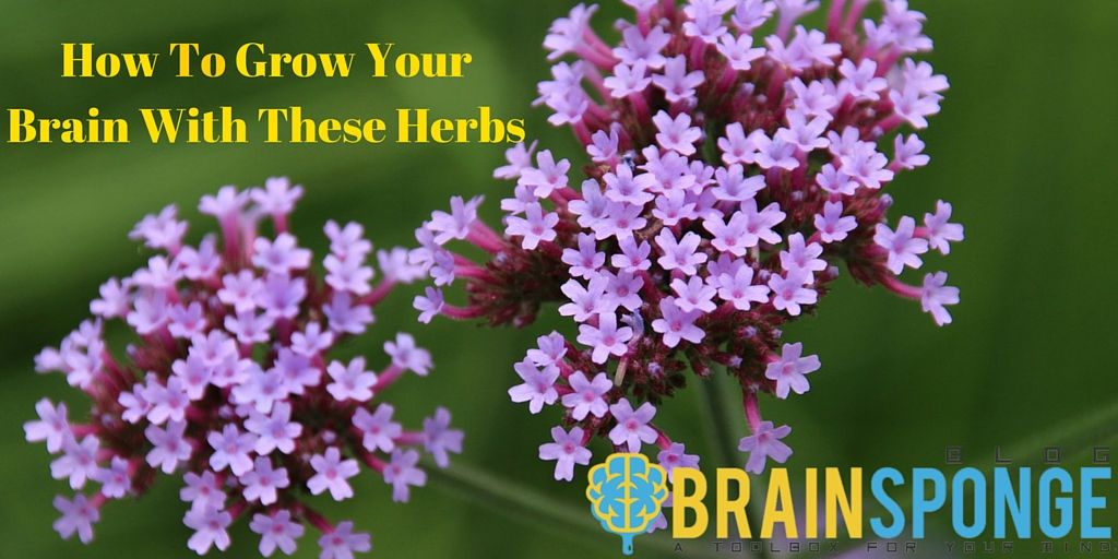 How to grow your brain with these herbs herbs your