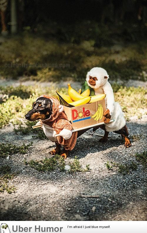 Costume For Dachshund Two Monkeys Carrying A Box Of Bananas