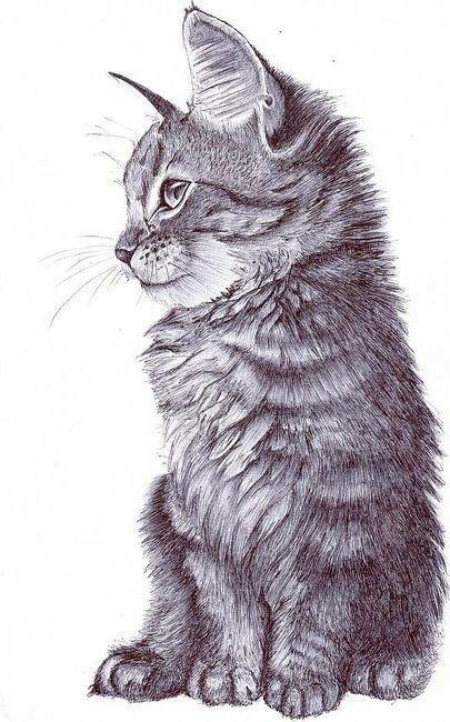 arte desenho felino gatos cat art in 2018 pinterest
