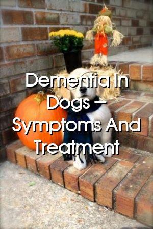 Madeleine Berry Tells About Dementia In Dogs – Symptoms And Treatment #dogsdiys#doghome#dogdog#babydogs#dogs#petscats#doglove#animatedpets#doglife
