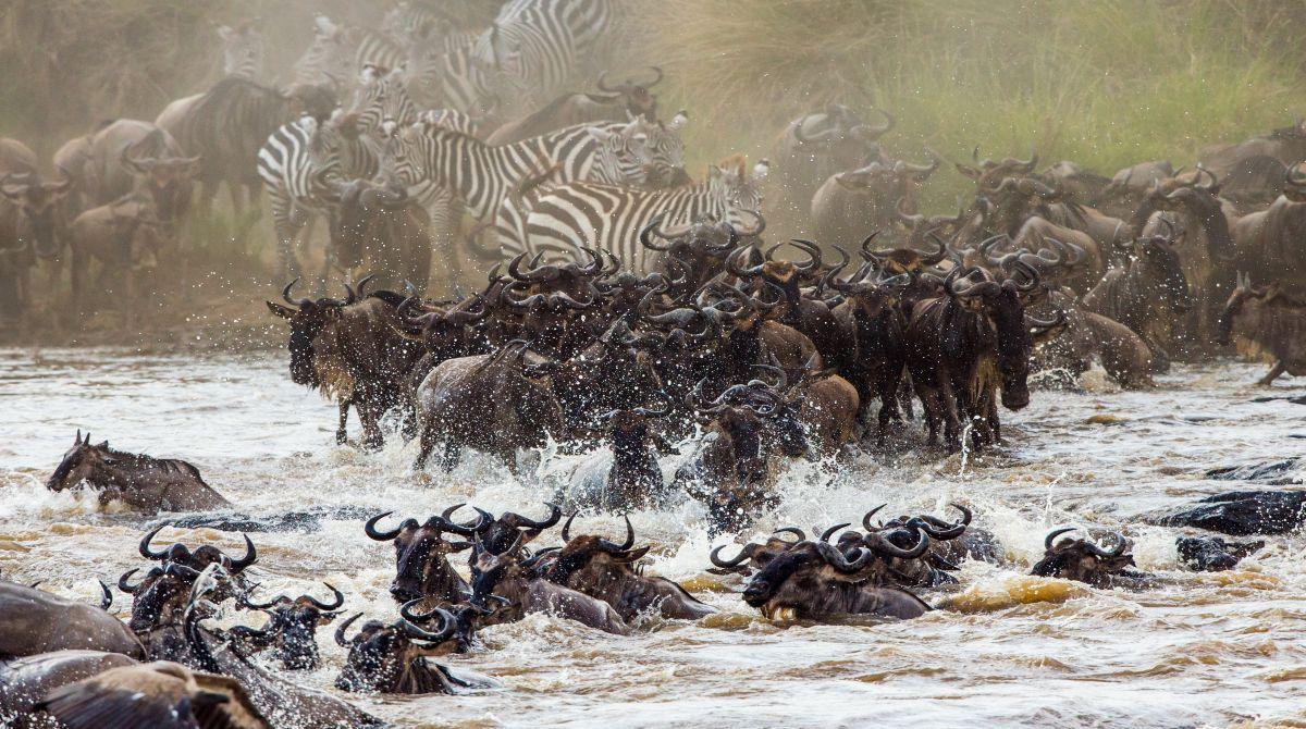 When Is The Best Time To See Serengeti Migration Serengeti Wildebeest Wildlife Safari