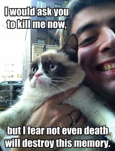 Lol Funny Cat Pic Mit Bildern Grumpy Cat Spruche Katzen