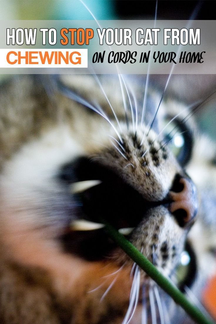 How to stop your cats from chewing on cords in the home