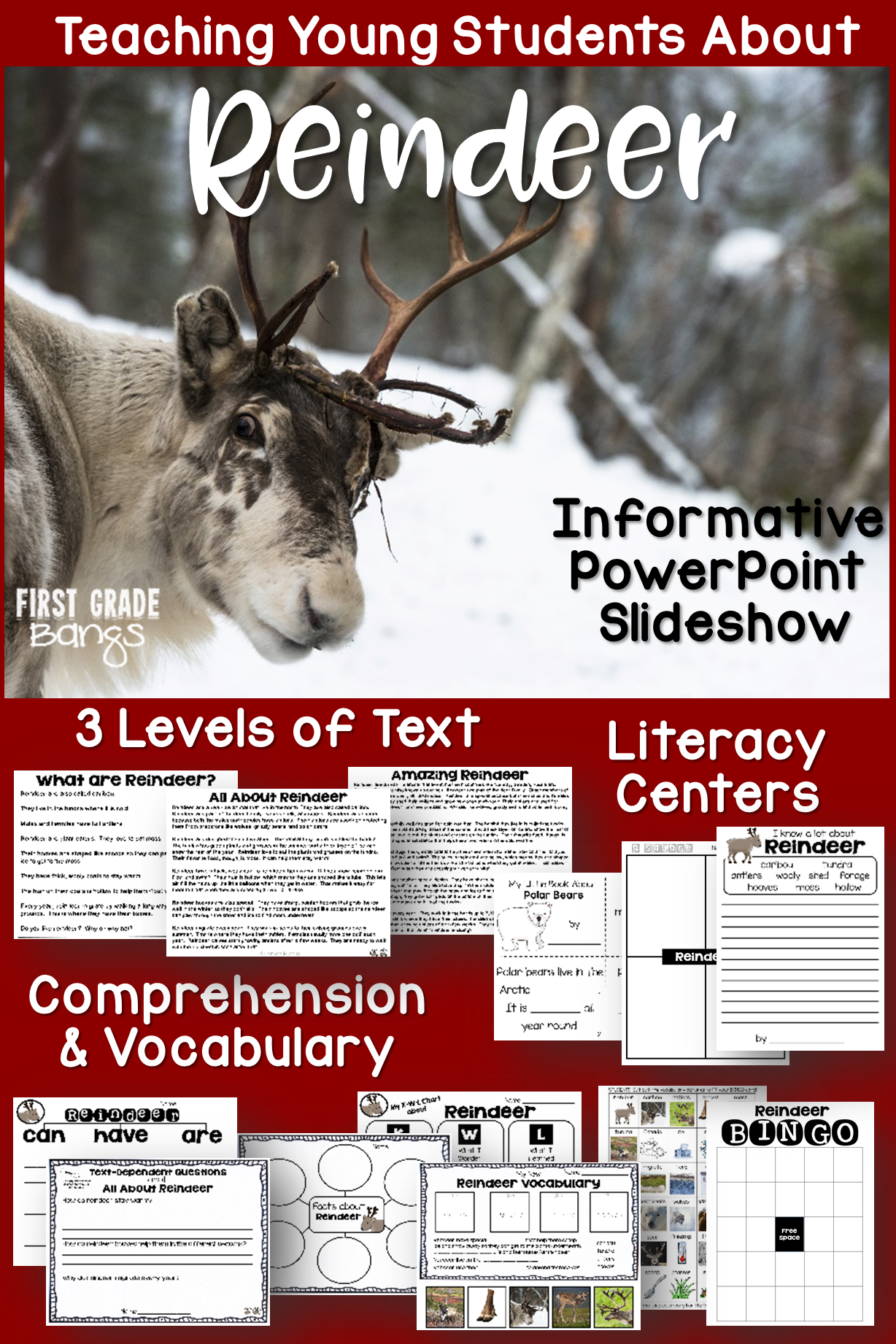 Powerful vocabulary slideshow, close reading texts, and lots of printables teach students all they need to know about real reindeer! #reindeer #animals #winter #closereading #kindergarten #firstgrade #secondgrade