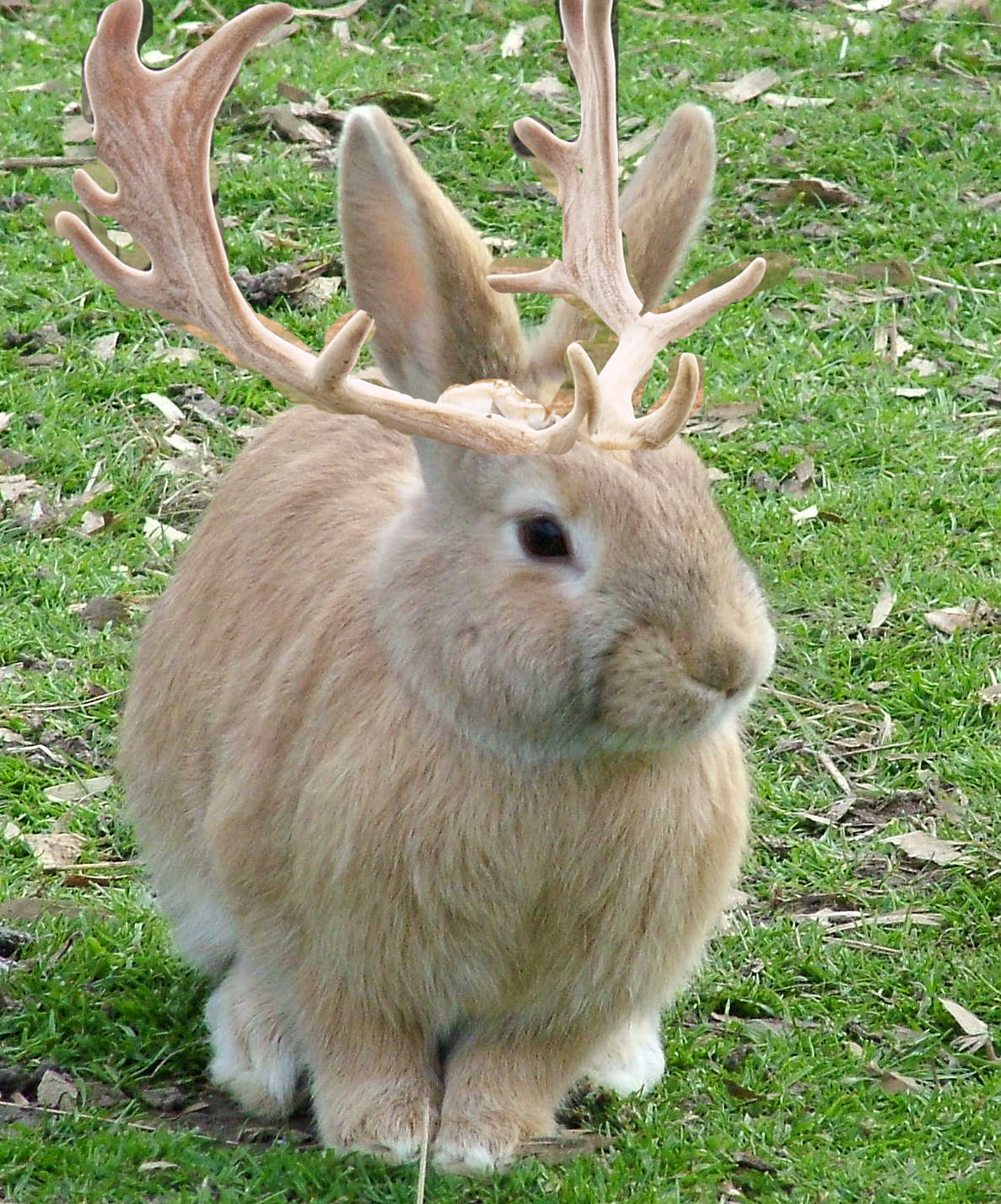 of course gustave got bigger but still so sweet jackalope pics