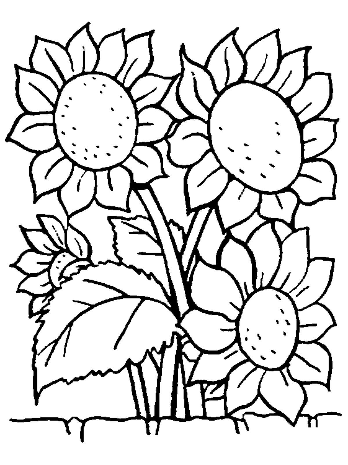 раскраска подсолнух, раскраска цветок | xinh xinh | Pinterest | Kreativ