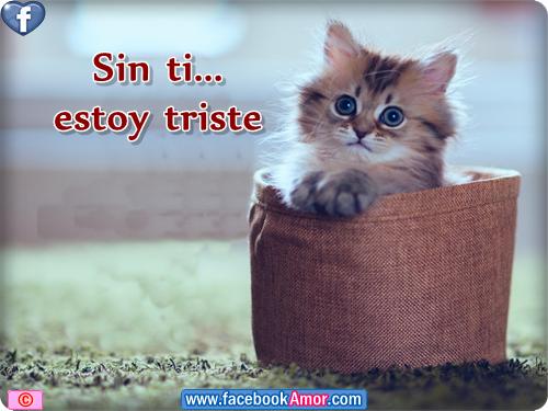 Frases Celebres Con Gatitos Lindas Imagenes De Tristeza Soledad