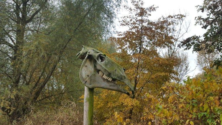 opfermoor niederdorla tierschädel  urwald nationalpark