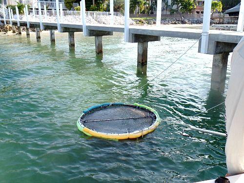 Live bait pen florida keys fishing pinterest for Where to buy fish bait near me