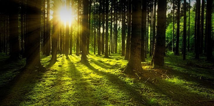 What Are The Differences Between Forests, Woods & Jungles? | The Fact Site