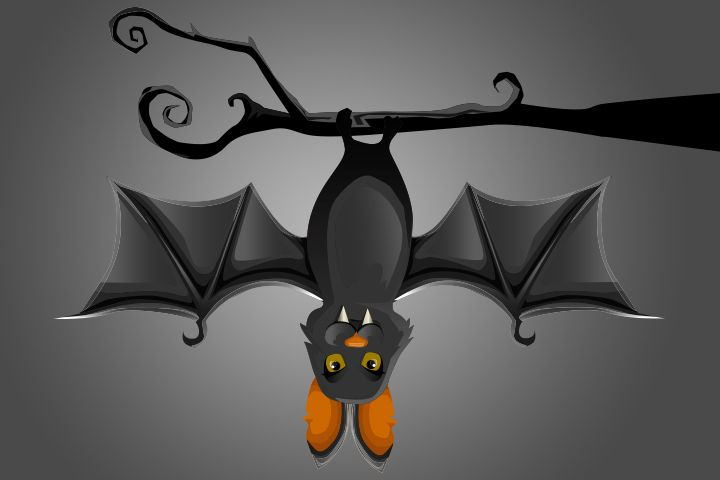 14 Important Facts And Information About Bats For Kids Bats For Kids Bat Facts For Kids Bat Facts