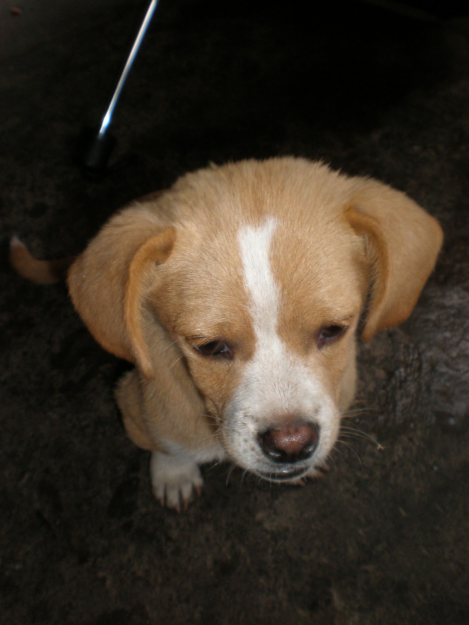 Williamsville Ny Mixed Breed Medium Meet Pearl A Pet For