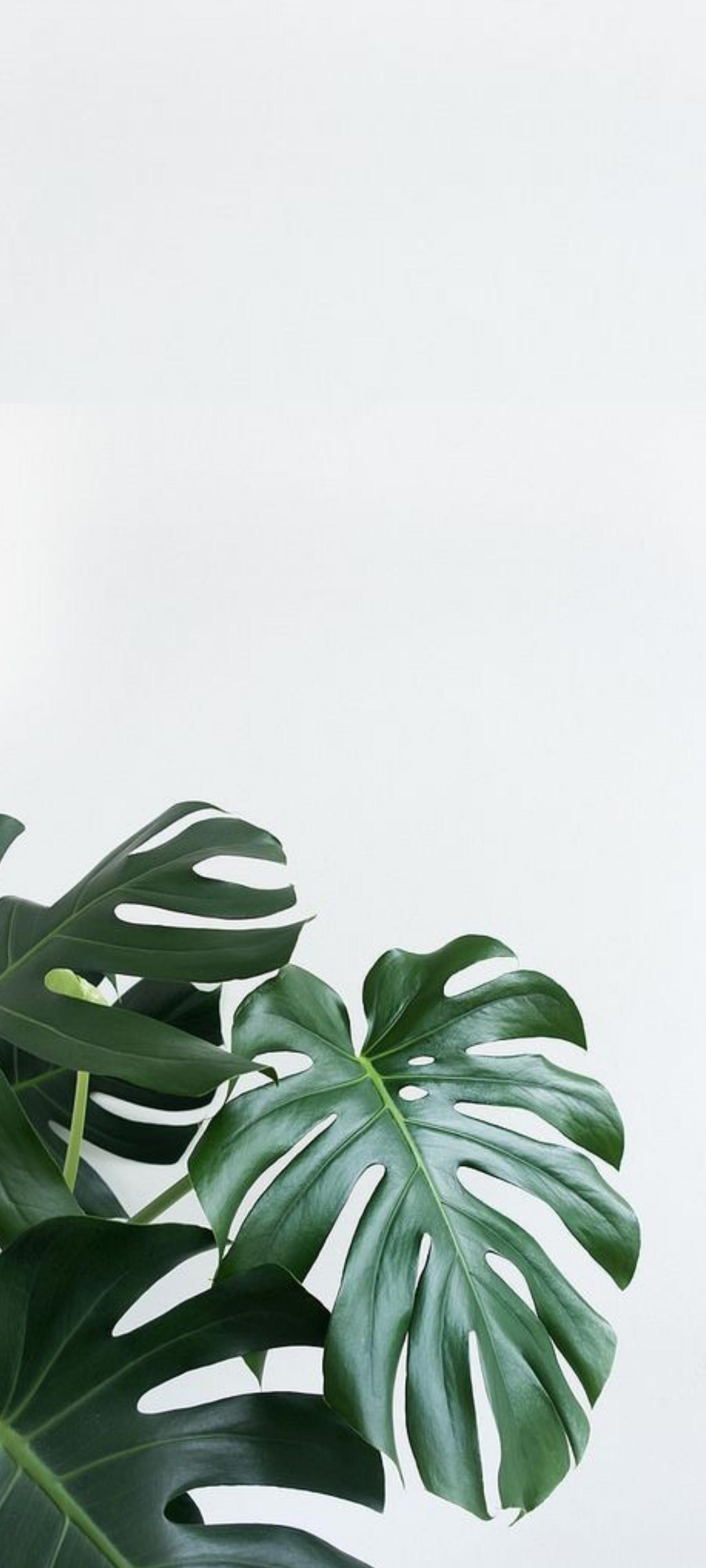HD Aesthetic Minimal Plant Phone Background | Leaves ...