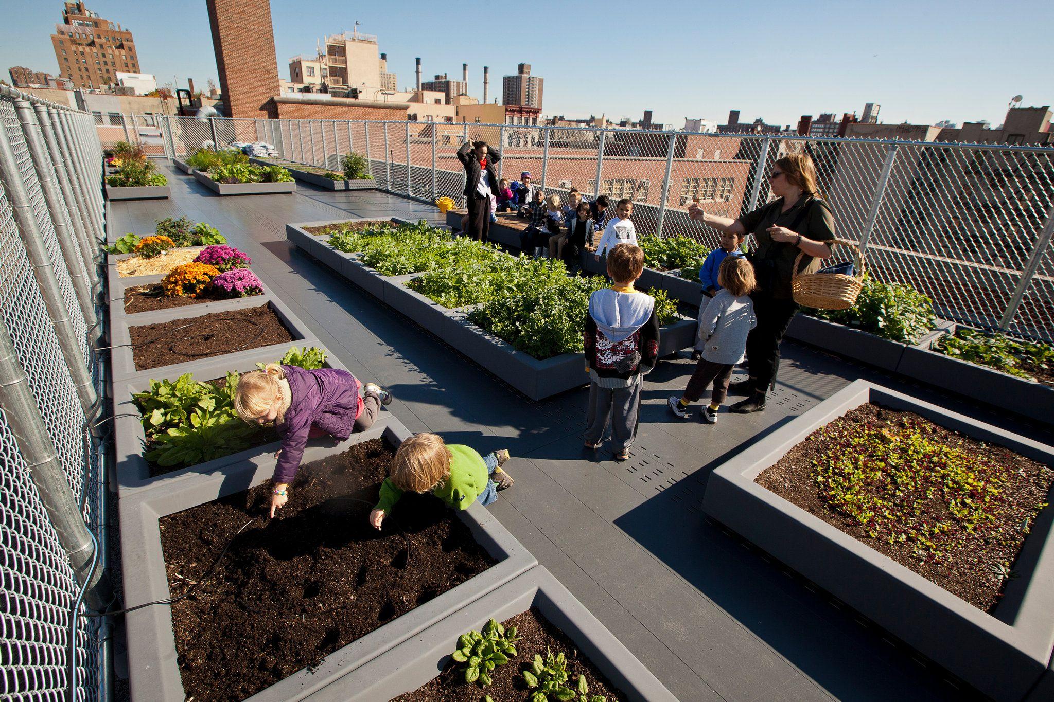 In The Book Bag More Garden Tools With Images Rooftop Garden School Garden Roof Garden