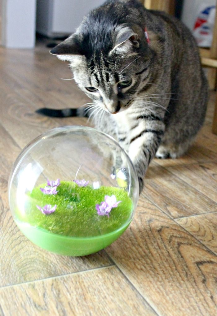 Motion Activated Cat Toys for Older Cats Pet insurance