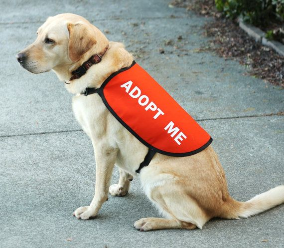 Adopt Me Dog Vest Jacket By Giveadogahome On Etsy These Are
